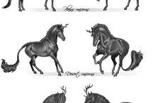 ló fajták