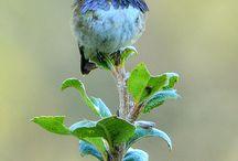 Vogels in allerlei  soorten in een natuurlijke omgeving