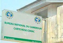 Cameroon Business News