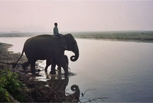 Amo elefantes...