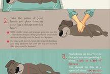 emergenza cani