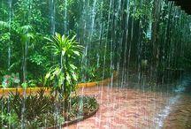 Rain / by Lydia Billman