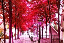 ~Lovely Pink~