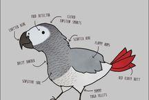 papoušci parrots