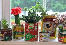 Mis plantas!