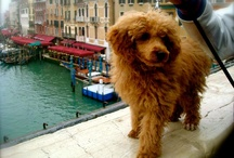 The adventures of Harley in Italy  / by Emily Beiriger