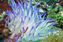 beautifil fish