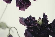 inspiracje-róż