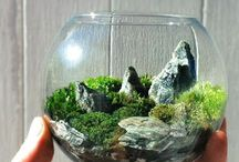 Terrarium / Fascinated by these beautiful little gardens, and hope to make some myself!