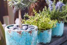 Herbing & Gardening~ / herbing et jardinage