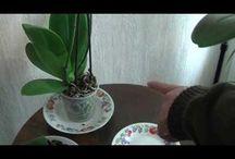 plantes maison