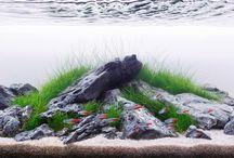 paludarium & aquascape