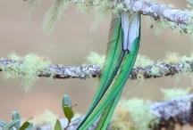 Les quetzal