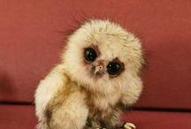 Owl cuteness!!!! / by Emmalea Huff