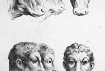 Charles le brun evolução / Séc XVII