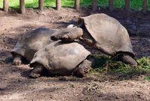 Mauritius: Turtles