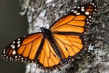 the mountain of butterflies
