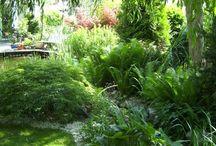 Schattengarten/Pflanzen