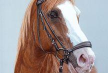 лошади и не только