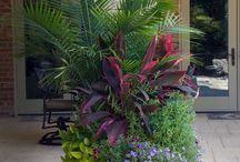 Plants for Apartment Living / Indoor plants and plants for small outdoor areas