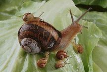 Snails :) / by Nacole Hines