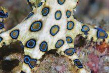 saltwater aquariums and marine life