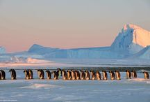 Antarctica Bucket List / Things to do in Antarctica including the Northern lights, dog sledding and glaciers. Places to see in Antarctica . Antarctica hotels, hostels, restaurants and culture.