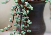 plants ;