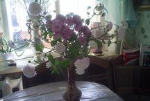 природа,цветы...