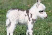 Obsession- Donkey Love ❤️ / For my love of donkeys