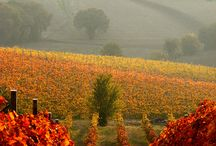 amazing vineyards my dream
