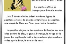 French Reading and Writing