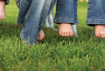 Lawn Care / Helping you grow a lush, green lawn without the use of harsh chemicals.