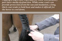 Horses- Hacks, Tricks, and Tips / If you have a horse, then you will find some amazing tips here to help you care for your pet better. Horses are incredible animals and can provide so much companionship.