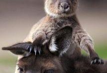 I love animals! / by Debra McDonald