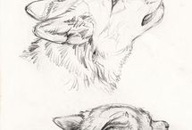how to depict animals / drawing
