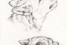 animal/creature inspo