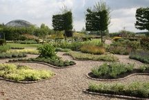 De tuin / Als ons plan door gaat, gaat de garage naar de tuin en de tuin komt achter het huis...dus ook ideetjes opdoen voor de tuin! Een tuin van 10m bij 10m / by Anita Holthuis (AnitaHvL)