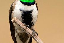 Birds that i love