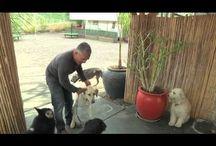Pet Training Videos