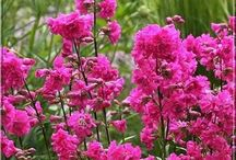 garden plants / flowers,trees