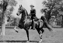 For the love of the Saddlebred