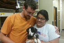 PetSmart EAC Happy Endings / Happy Endings from our new PetSmart Everyday Adoption Center! / by DallasAnimalServices
