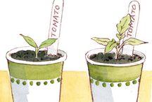 Planting/Plants/Crops / by MaryAnn Wertswa Reuter