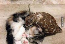 bagoly és cica
