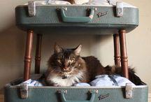 Katt og katter