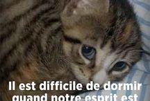 Citation felines