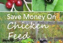 BACKYARD :: Chickens / From decorating your coop to caring for your brood, this board is everything about chickens, homesteading and urban farming!