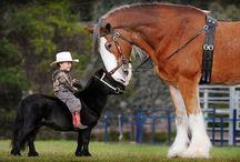 Pferde und andere Tiere