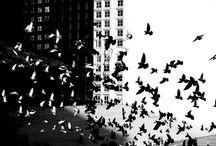 Black & white / by Olivia Widmark